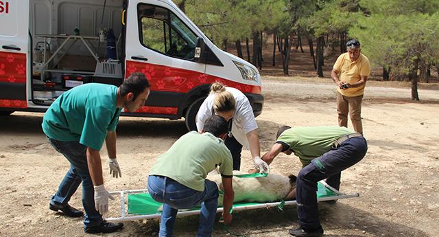Hayvan ambulansı hizmette